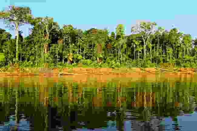 Planting trees in Peru (Shutterstock)