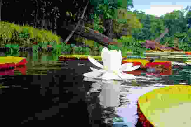 A new flower opened in front of us, its colour a pure white, unlike the surrounding pink lilies (Simon Chubb)