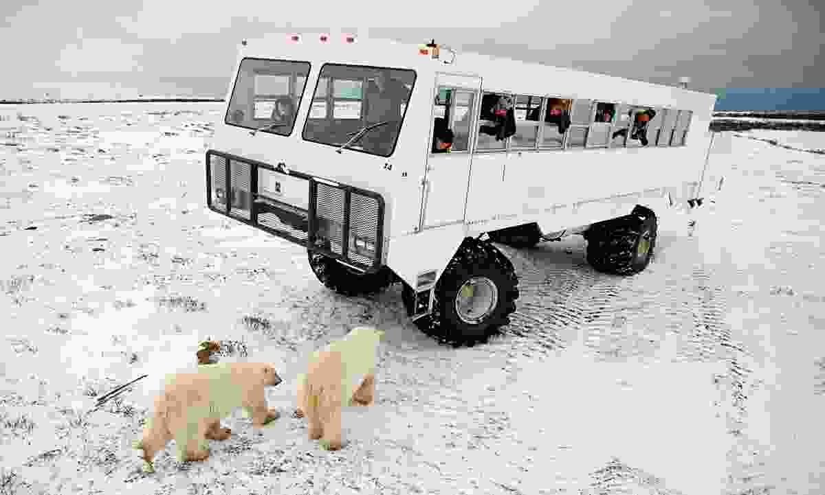 Tundra buggy on an adventure tour from Churchill, Canada's polar bear watching capital (Dreamstime)