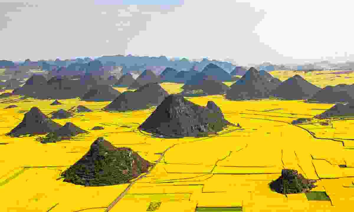 Rapeseed fields in Luoping (Shutterstock)