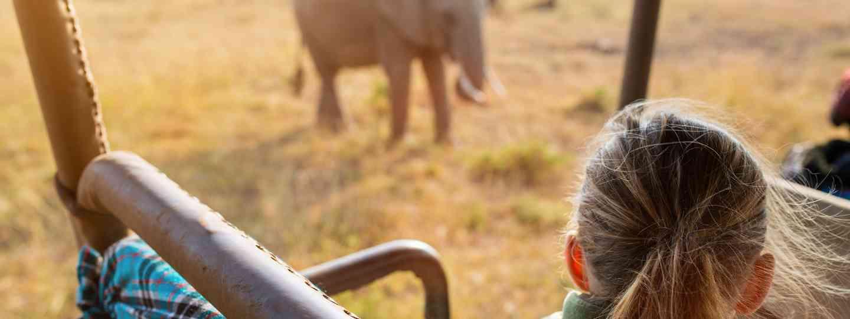 Encountering an elephant on an African safari (Shutterstock)