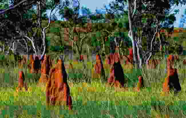Magnetic Termite Mounds at Litchfield National Park (Shutterstock)