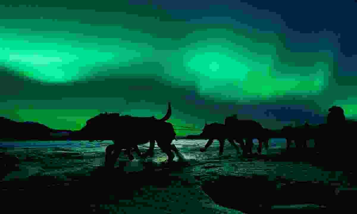 Dog sledding under the northern lights (Dreamstime)