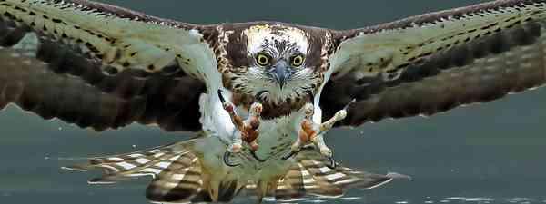 Birds reintroduced to the UK