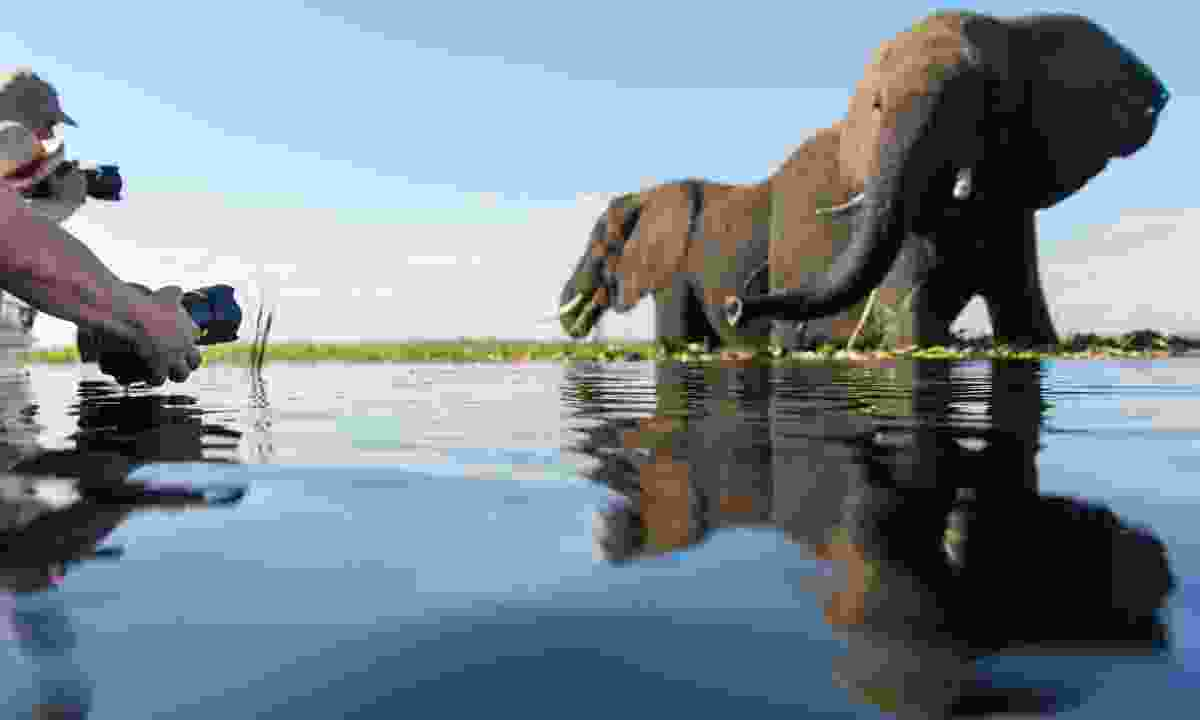 Photographing elephants in Botswana (Dreamstime)