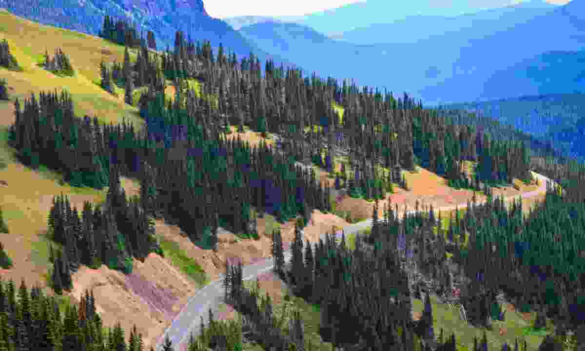 Road winding through Olympic National Park (Dreamstime)