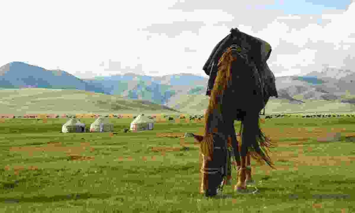 Horse grazing near yurts (Lyn Hughes)
