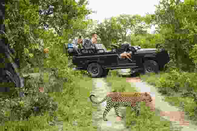 Tourists photographing a leopard in Africa (Shutterstock)