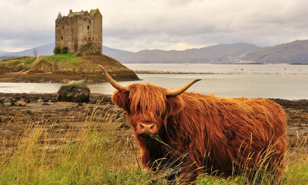 25 things to do in wild Scotland