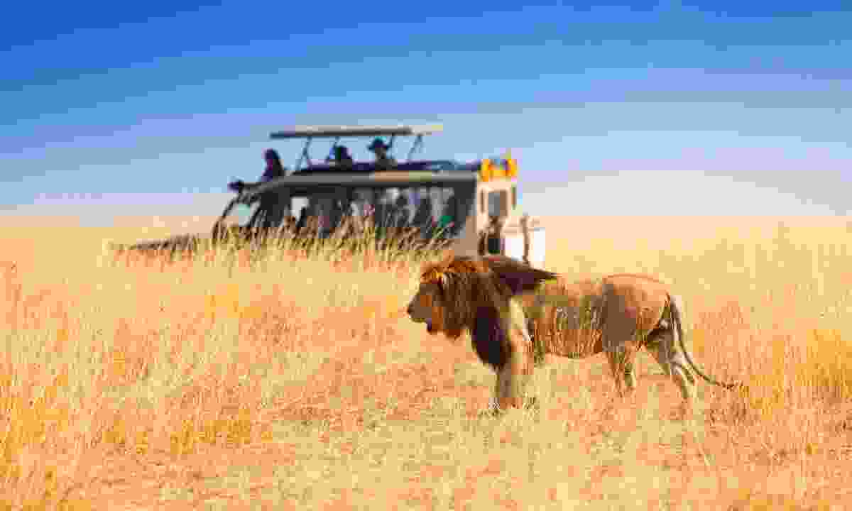 Get up close and personal to the wildlife in a jeep (Dreamstime)