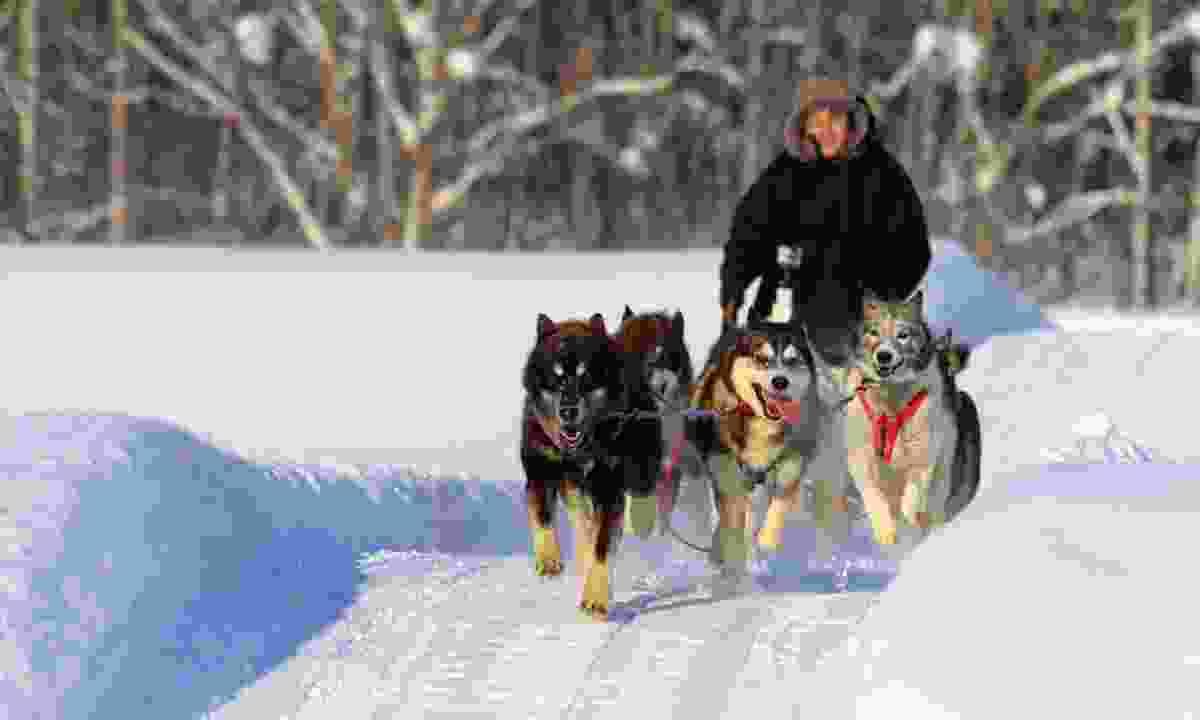 Dog-sledding at 30km/h through a pristine white world (Graeme Greene)