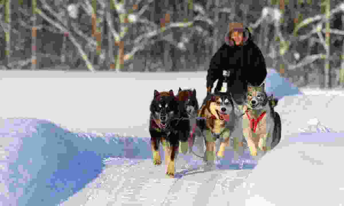 Dog-sledding at 30km/h through a pristine white world (Graeme Greene)