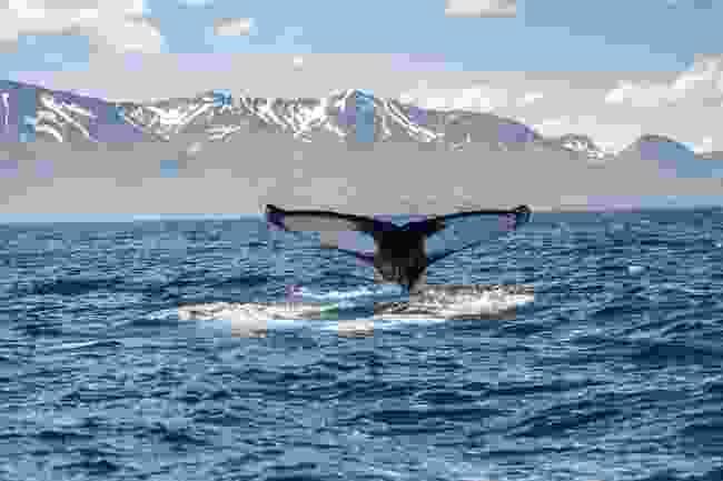 Spot whales in GeoSea (Shutterstock)