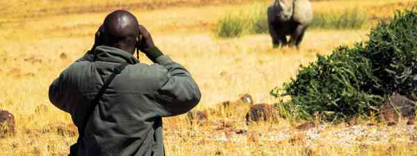 Tracking black rhinos (Sarah Gilbert)