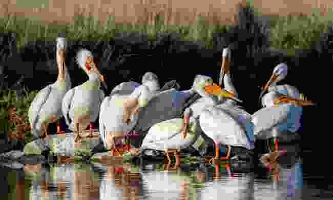 Visit the Bear River Migratory Bird Refuge (Marc Piscotty)