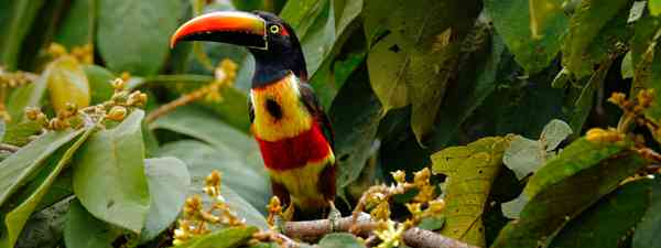 How well do you know Costa Rica? (Shutterstock)