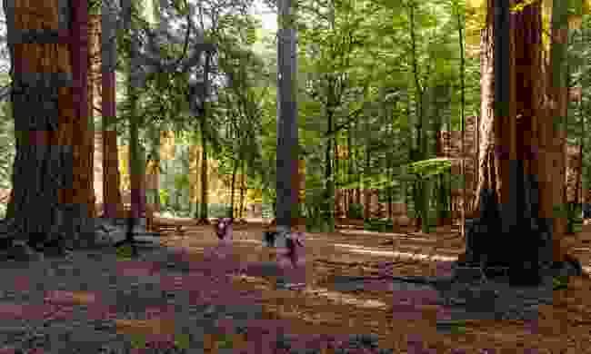 Children running amongst the giant Sequoias on Rhinefield Ornamental Drive (Shutterstock)
