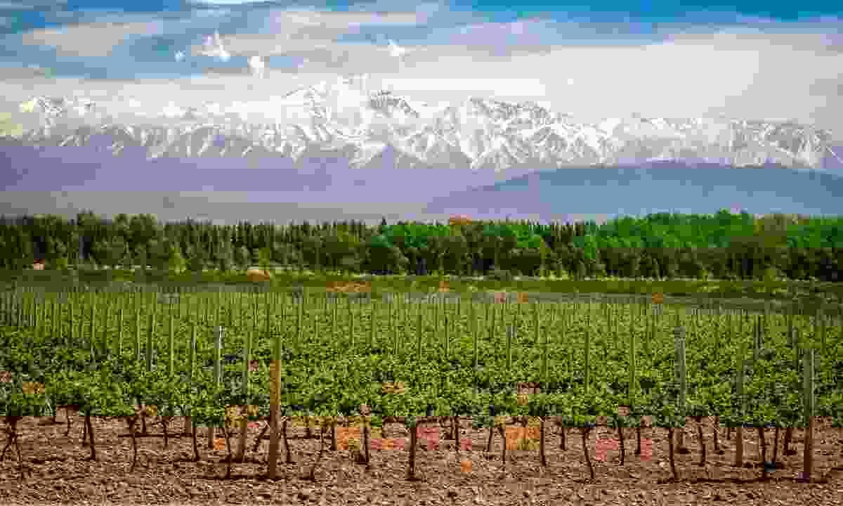 Organic vineyards near Mendoza (Shutterstock)