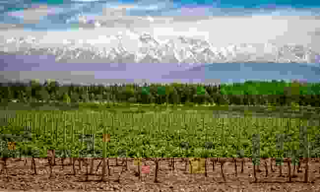 Organic vineyards near Mendoza (Shutterstock)