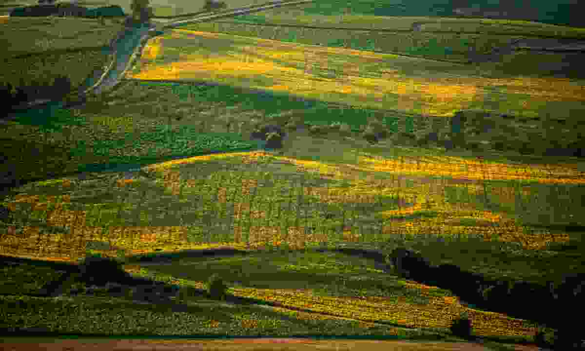 Vineyards near Gaillac (D. Viet)
