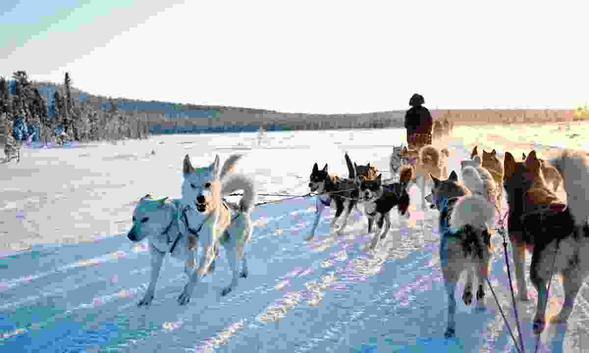 Dog sledding in Kiruna, Sweden (Dreamstime)