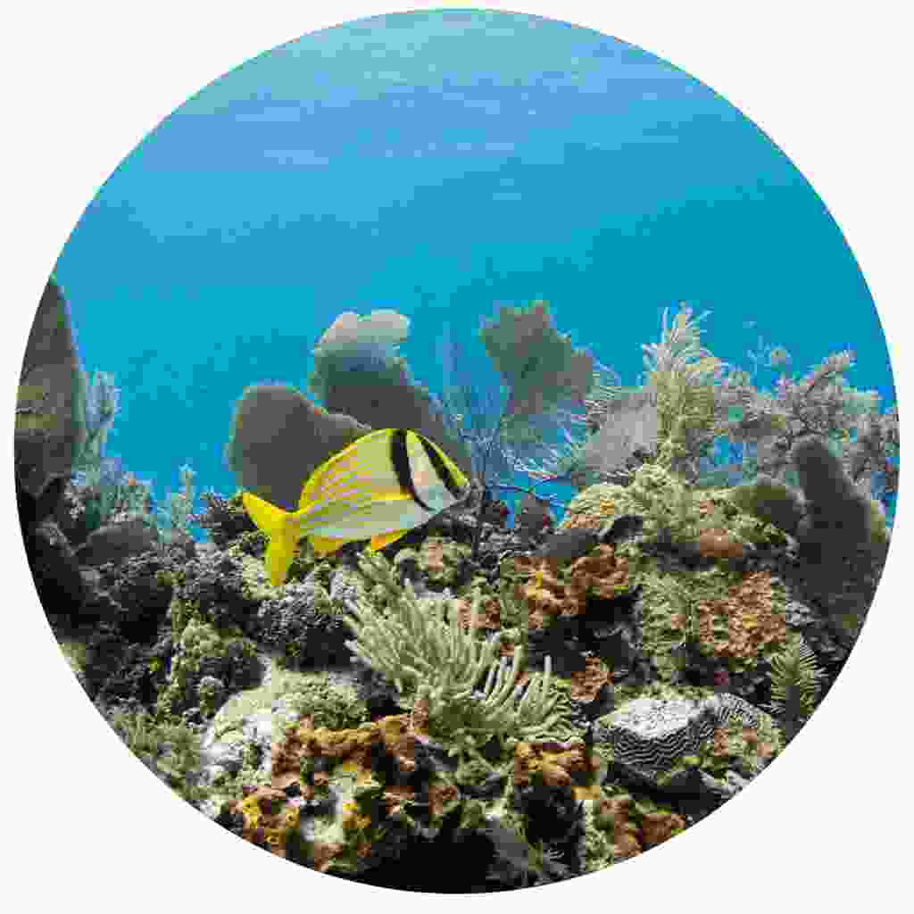 Marine life off the Isle of Youth (Shutterstock)