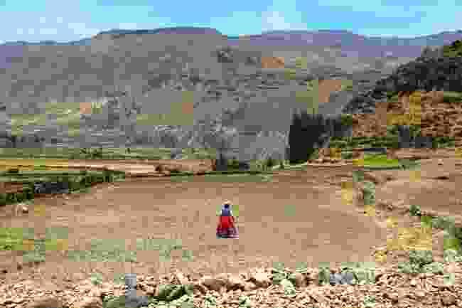 Local woman crossing fields near Colca Canyon, Peru (Graeme Green)