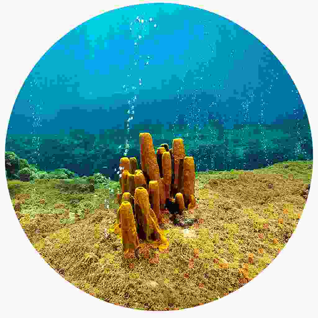 The bubbling Champagne Reef