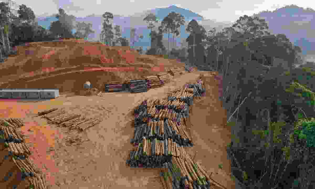 Deforestation of Sumatra, Indonesia (Shutterstock)
