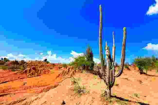 The Tatacoa Desert (Shutterstock)