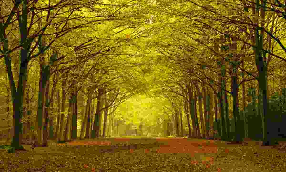 Autumn forest in Norfolk (Shutterstock)