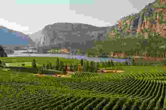 Vineyards in Okanagan Valley (Shutterstock)