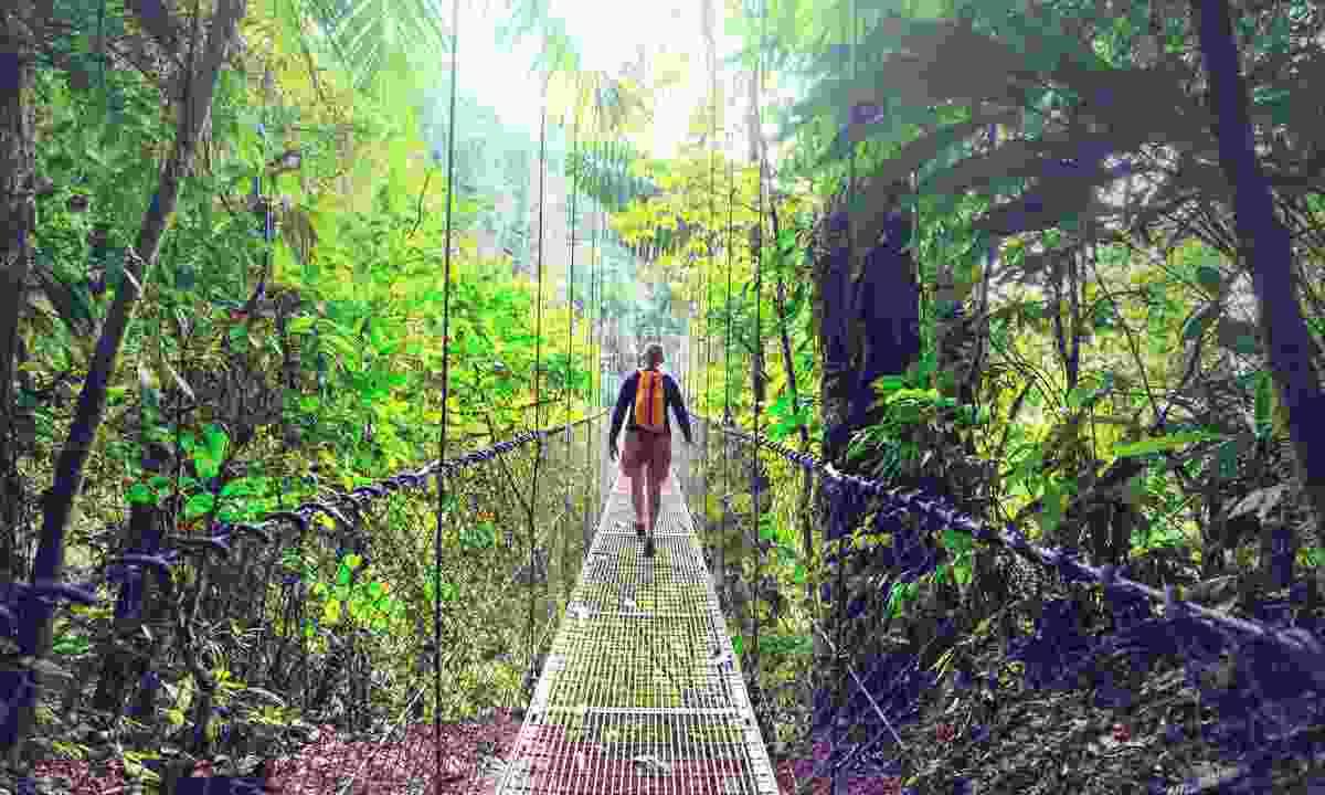 A hanging bridge in Monteverde (Dreamstime)