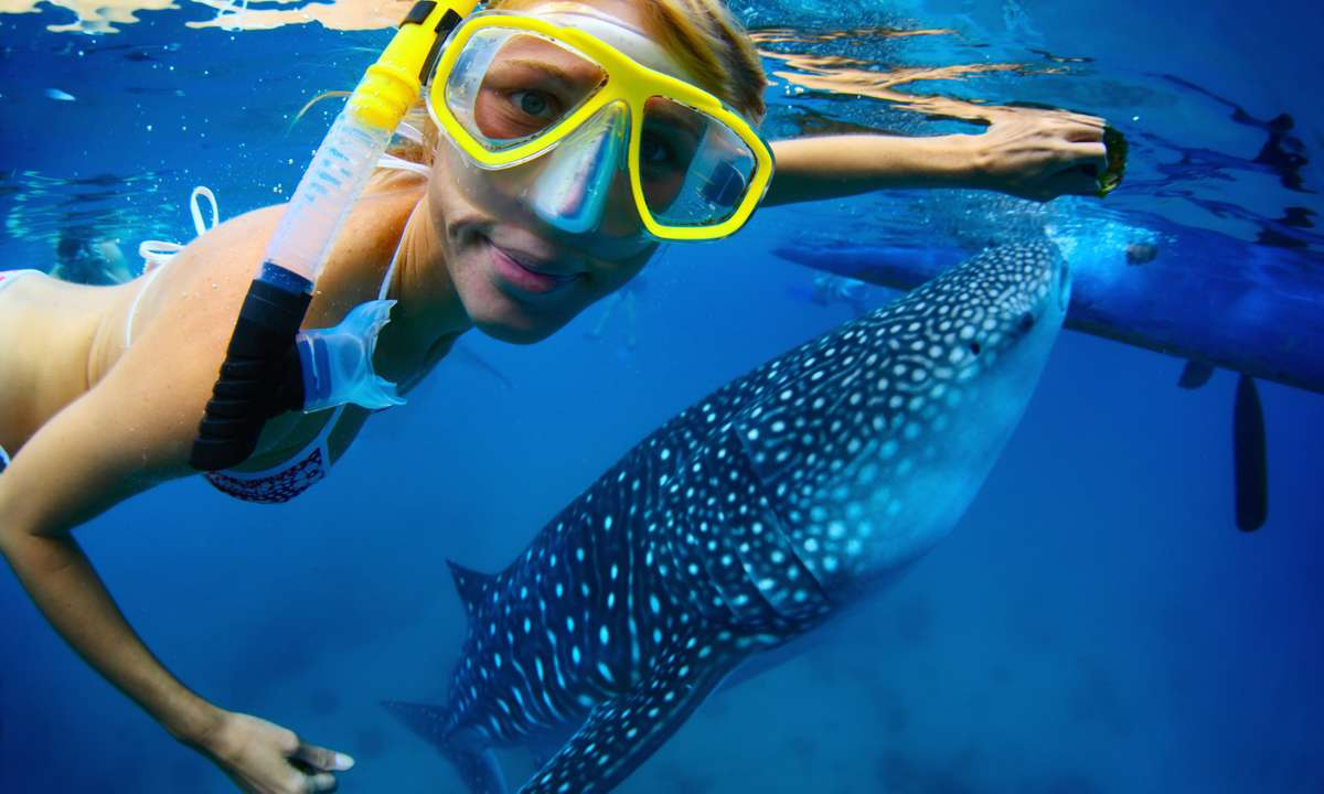 Swimming with a whale shark in Oslob (Dreamstime)