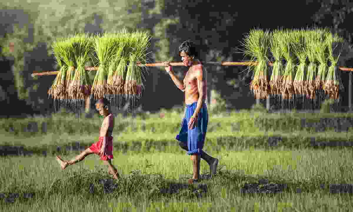 Rice farmer and son in Battambang (Shutterstock)