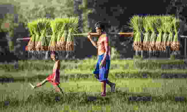 Rice farmer and son in Battambang (Shutterstock)