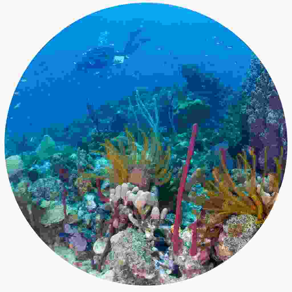 Diving with colourful coral