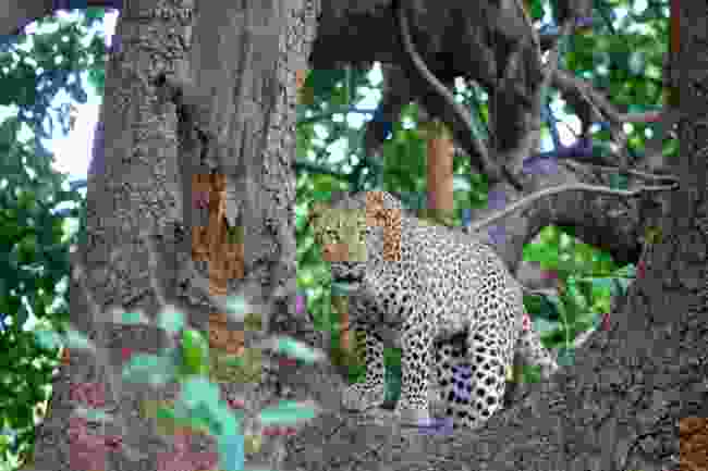 South Luangwa National Park, Zambia. (Dreamstime)