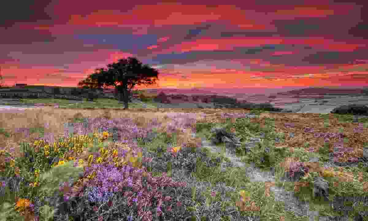 Ventnor Down at sunset, Isle of Wight, UK  (© UNESCO/Courtesy Visit Isle of Wight - United Kingdom)