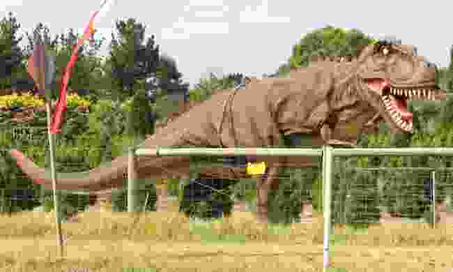 A lifesize dinosaur chained to a fence in Australia – after all, we wouldn't want it storming through the city! (Dreamstime)