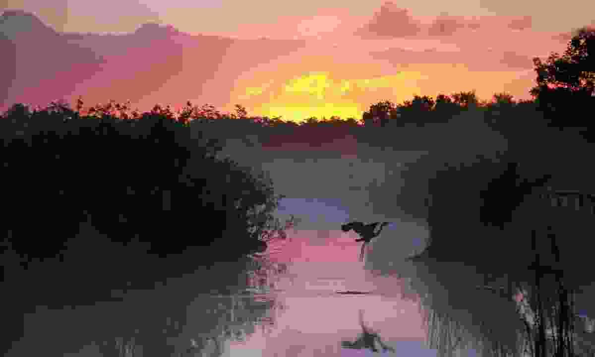 Everglades National Park, USA (Shutterstock)
