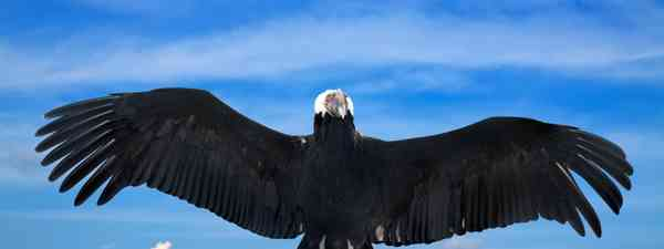 Spotting Condor in Argentina's Andean Patagonia (Shutterstock)