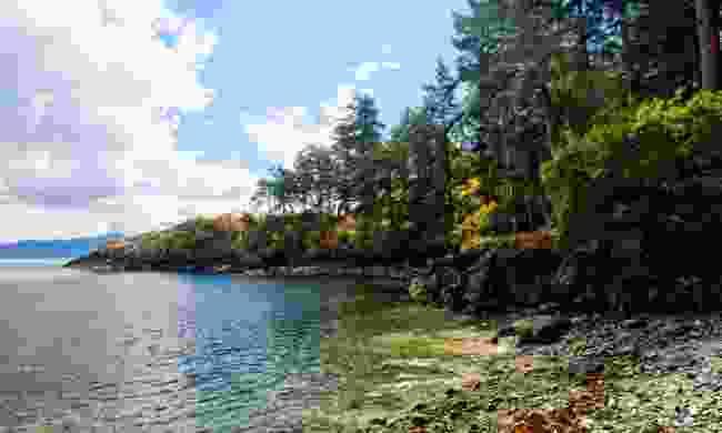 Ruckle Provincial Park (Shutterstock)
