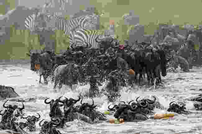 The Great Migration, Tanzania/Kenta (Shutterstock)