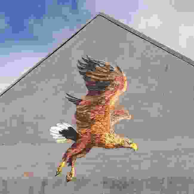 White tailed eagle, Stavanger, Norway (ATM/Toris64)