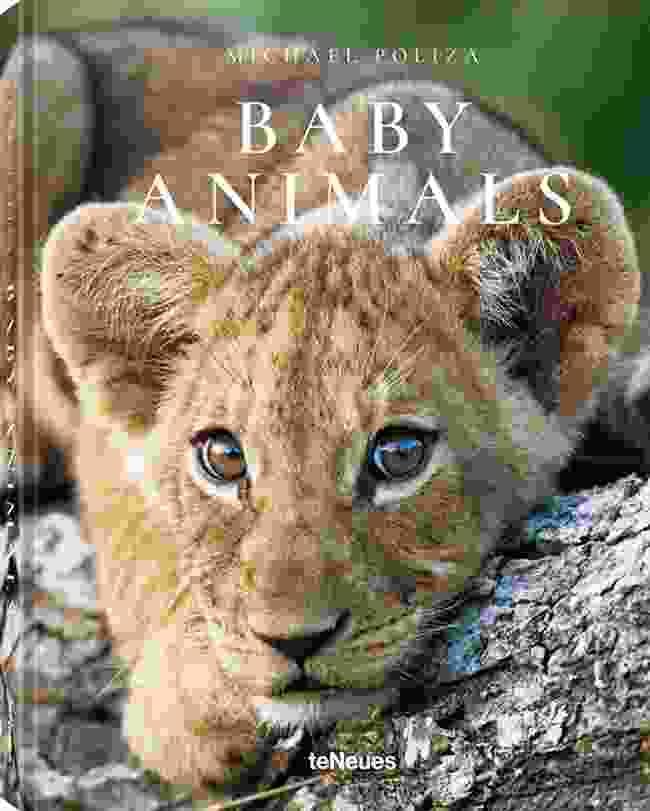 Baby Animals by Michael Poliza, to be published by teNeues in November 2018, € 14,99, www.teneues.com, Lion cub, Savuti region, Botswana (Photo © 2018 Michael Poliza)