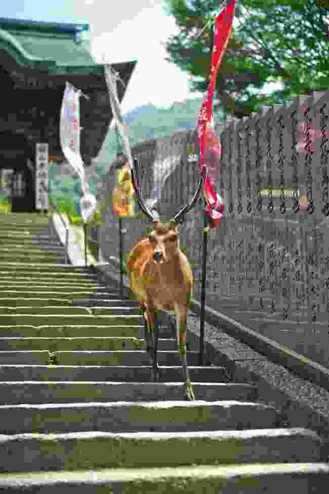 Spotting deer outside the Daisho-in Temple (Mark Stratton)
