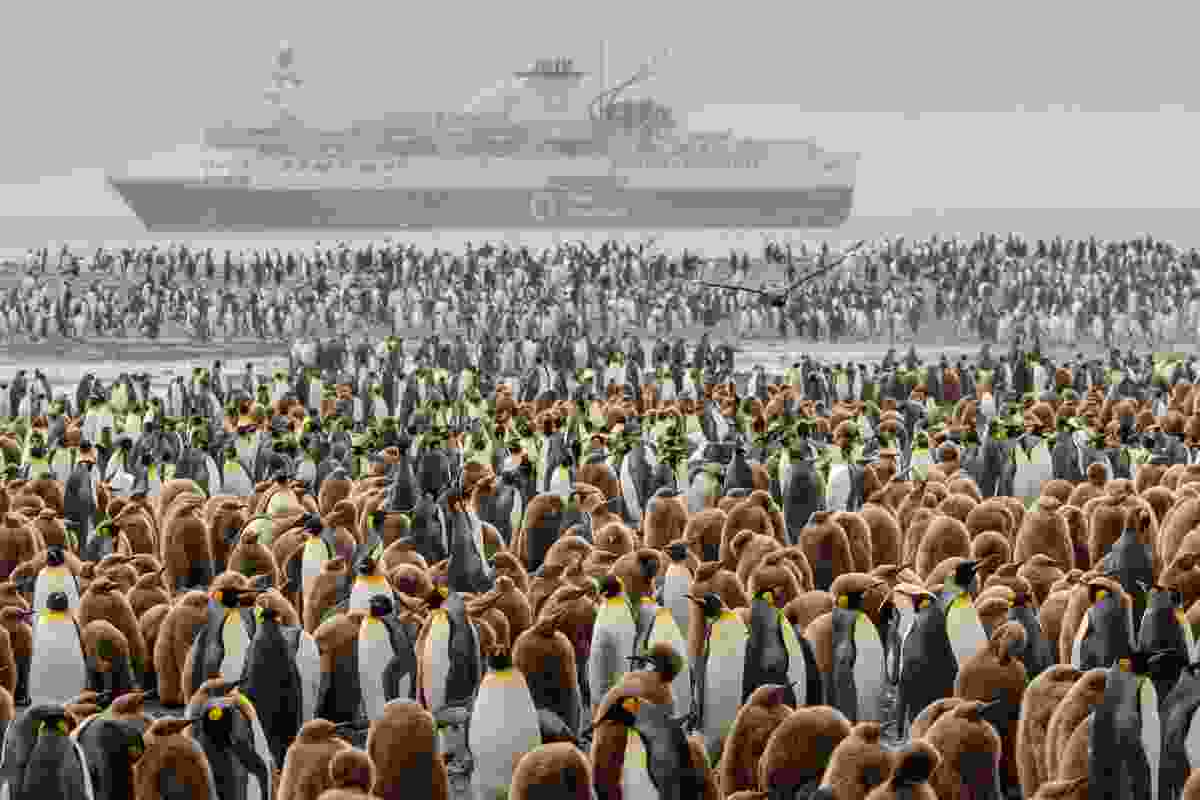 A huge penguin colony at Sailsbury Plain, South Georgia  (Michelle Sole)