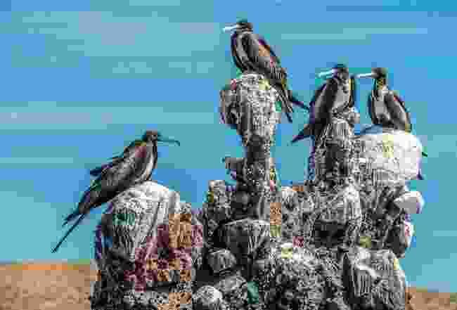 Sea birds strike in Baja California Sur (Phoebe Smith)
