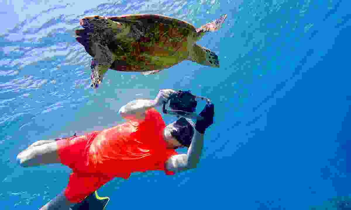 Snorkelling with a sea turtle in Sri Lanka (Dreamstime)